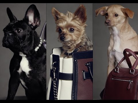 COACH PRESENTS THREE LITTLE DOGS IN #COACHPUPS