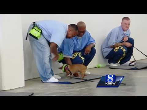 Soledad prison inmates train shelter dogs