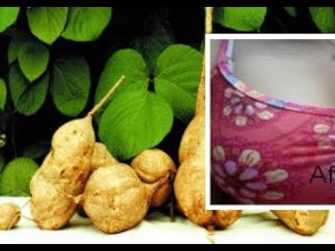 How to make breasts grow using Pueraria Mirifica