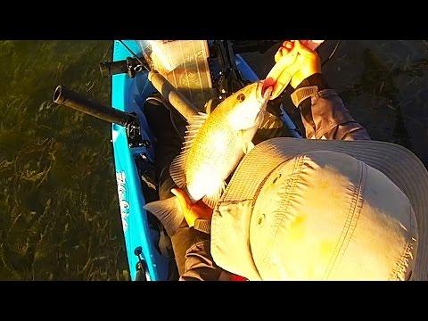 Key West Kayak Fishing: Catching Sandwich Mangrove Snappers w/ Pinfish