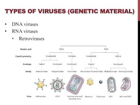 Introduction to viruses