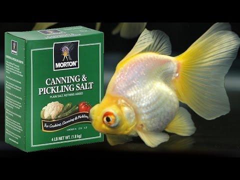 Salt Dip Tutorial for Sick Fish