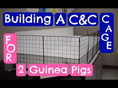 Building a C&C cage for 2 Guinea Pigs