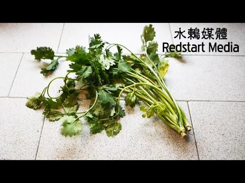 How to keep your cilantro fresh 如何讓香菜保鮮