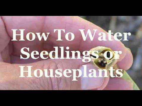 How To Water Seedlings or Houseplants
