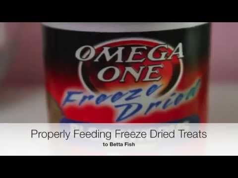 Properly Prep Freeze Dried Bloodworms Betta Fish