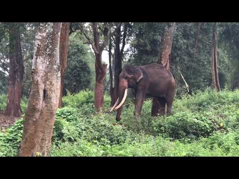 Mudumalai Tiger Reserve - Amazing Environment feel Good all the Time