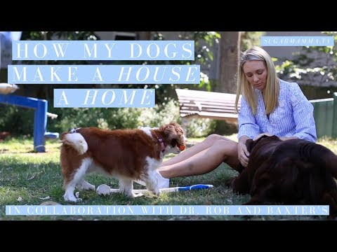 How My Dogs Help Me Cope With Stress & Make My House A Home || SugarMammaTV