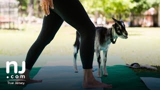 Goat yoga comes to Garden State