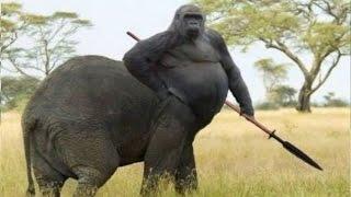 15 Amazing Hybrid Animals