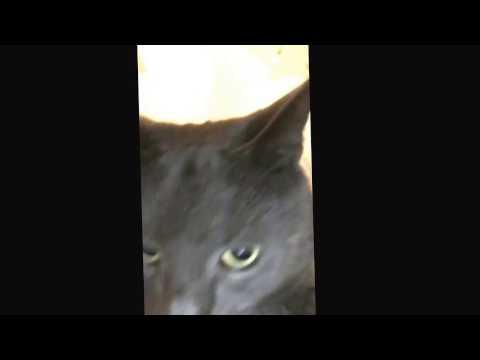 Fat cat cures diabetes