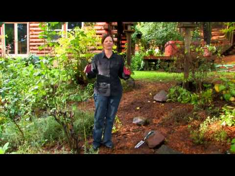 Steps in Planting a Garden