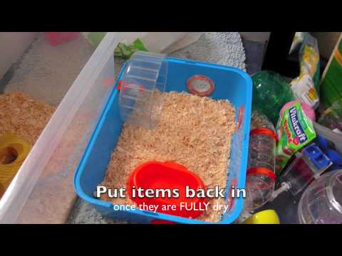 How to clean out a hamster cage properly