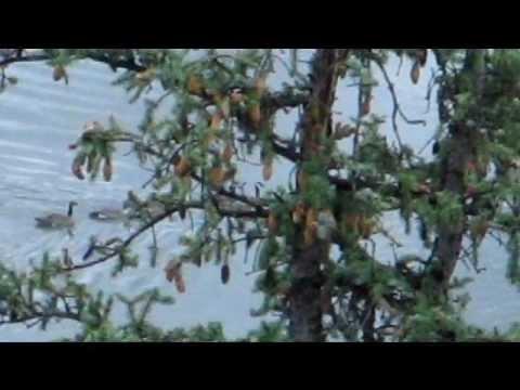 The Cabin (Video):  Day 2 Colorado Vacation