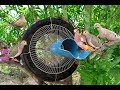 Awesome Quick Bird Trap Using Car Tire And Electric Fan Guard Bird Trap   Best Water Pipe Bird Trap