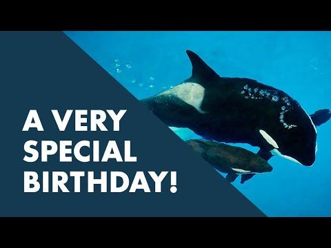 Happy Birthday, Takara!   SeaWorld®