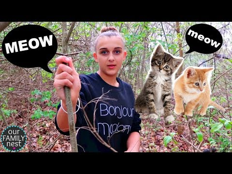 KITTENS CRYING IN OUR WOODS & NEW FURNITURE DELIVERED!!