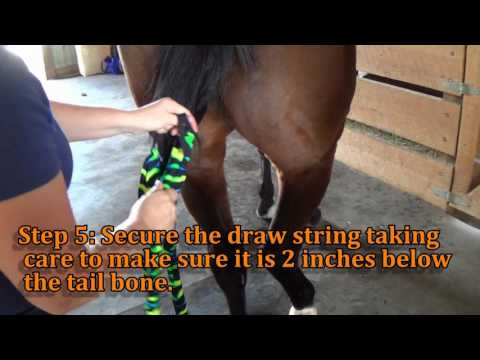 How to put in your horse's tail bag.