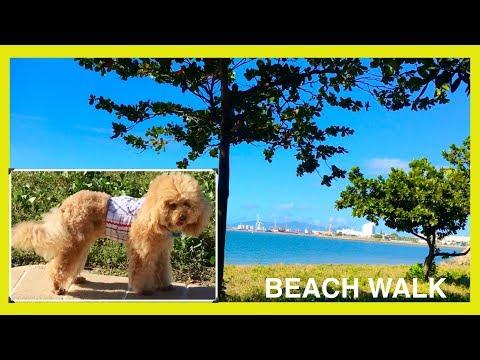 WALK THE BEACH SUMMER SUN SAND SURF  - DIY DogFood&Fun by CookingForDogs