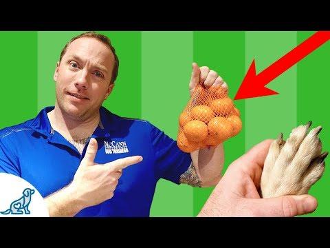 How To Clip Dog Nails At Home-2 Strange Tricks