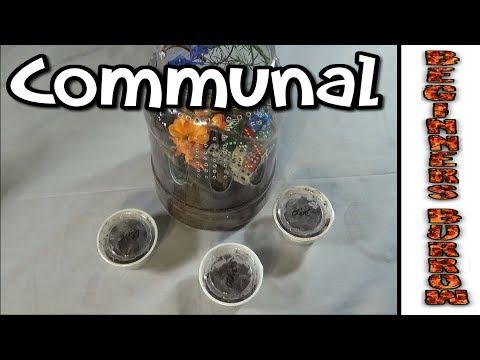 N Incei Communal / Exciting Ending  - Beginners Burrow