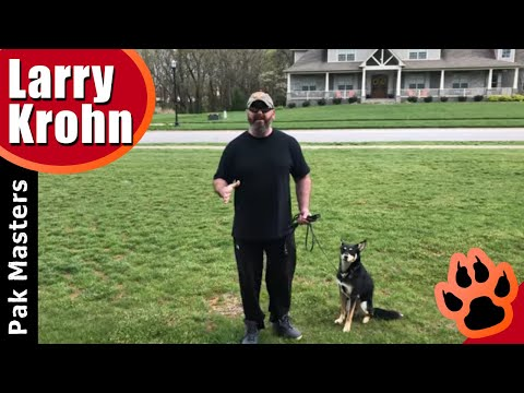 Dog training through touch / fixing fear and abusive training