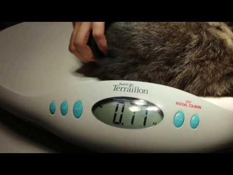 Skin mite infections and crusty ears in a young rabbit