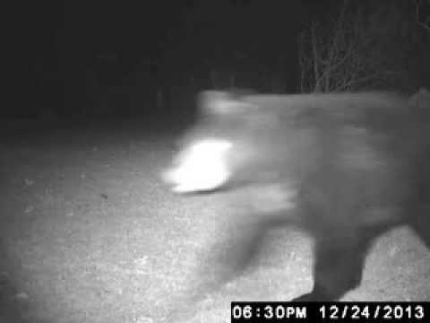 Christmas Eve Bear