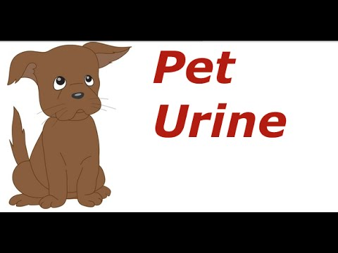 How to get dog & cat urine out of carpet