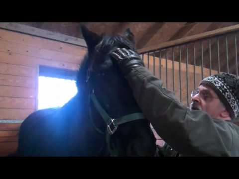 Equine Cranial Sacral Therapy--Head Shaking Syndrome
