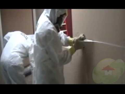 Mold On Walls, Drywall Or Sheetrock
