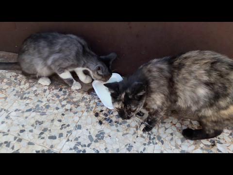 How to cure and treat deyhydrated cats with yogurt and water , the best way  !!!