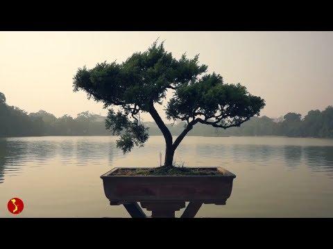 [Vietnam Trip]: Travel To Vietnam - Sapa, Ha Long bay, Hoi An, Mekong Delta