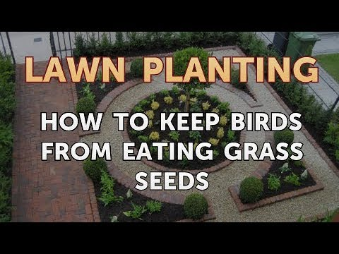 How to Keep Birds From Eating Grass Seeds