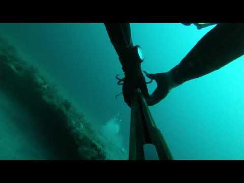 North Florida Spearfishing Mangroves, Triggers, Sheeps, & Flounder