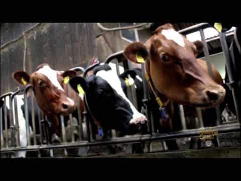 Brain Food: Dairy
