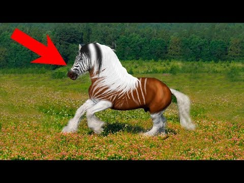 10 Animals People Forced Into EXTINCTION!