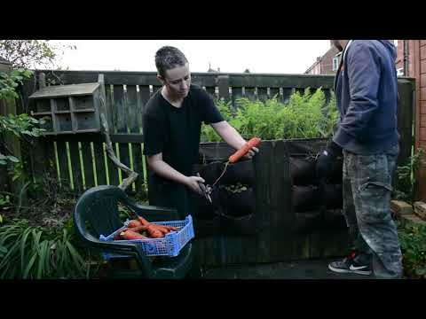 Garden Allotment Ep 83 - Harvesting & Canning this years carrots