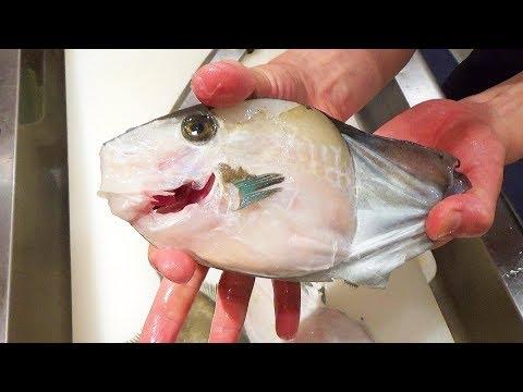 Xxx Mp4 이 생선의 XX로 만든 간장으로 사시미를 먹었더니 충격적인 맛이었다 How To Fillet And Eat Filefish Filefish Sashimi 3gp Sex