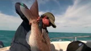 SNAPPER FISHING on lures -  triple hook-up 14.5kg giants!
