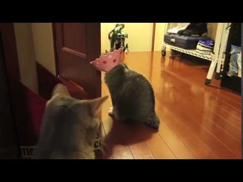 Funny Elizabethan Collars in Cats clip16