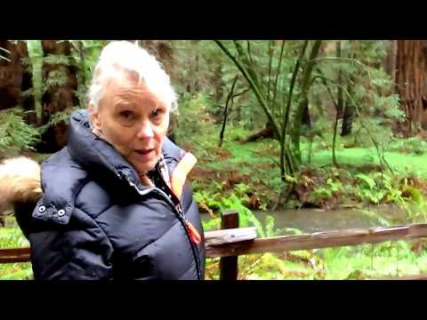 In Muir Woods at San Francisco Bay, California on March 15, 2018