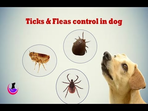 Ticks and fleas control measures in dog