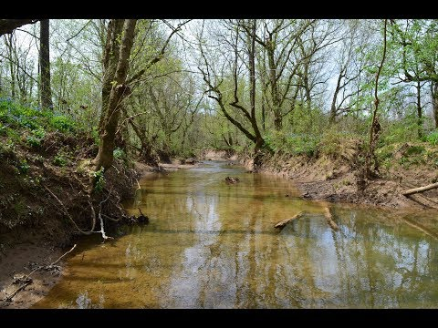 Secluded 143.9 Acre Property in Western, KY For Sale