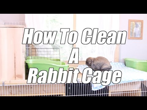 How To Clean A Rabbits Cage