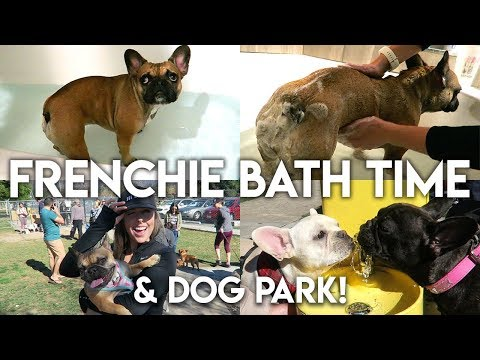 FRENCHIE BATH TIME & DOG PARK