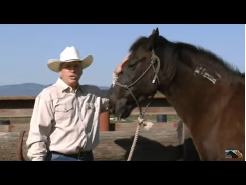 How to Hobble train a horse - Rick Gore Horsemanship - www.thinklikeahorse.org