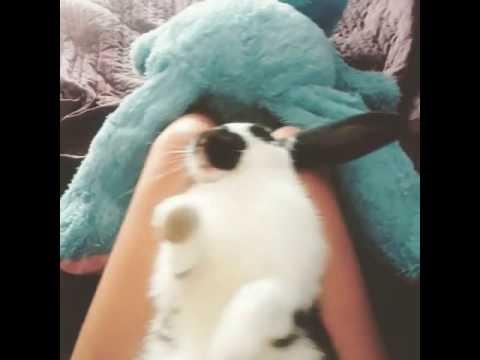 How to make a bunny to fall asleep