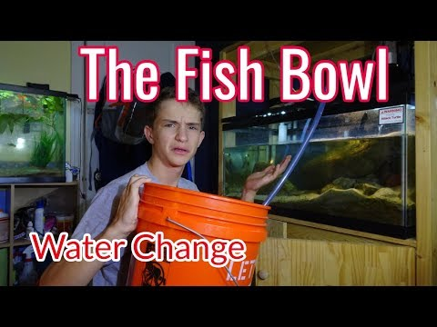 The Fish Bowl: Water Change