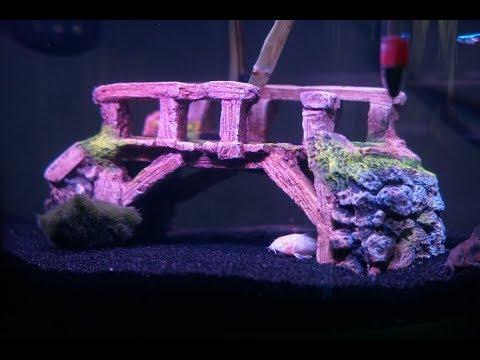 New Betta Fish Tank